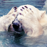 Don't Poke The Bear – How to Create FANtastic Content